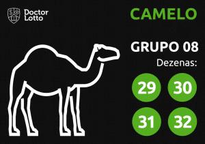Grupo 08 - Dezenas do Camelo - Jogo do Bicho