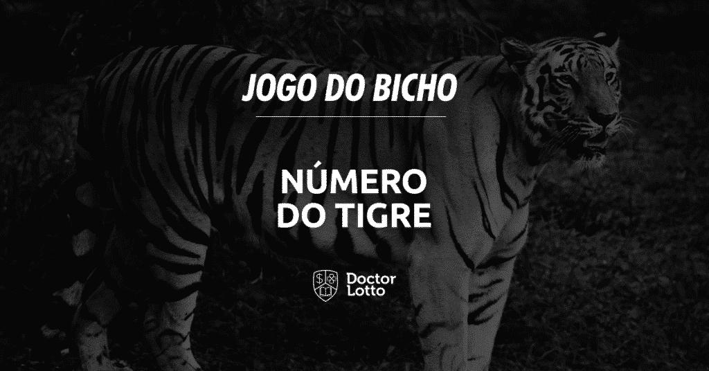 tigre no jogo do bicho